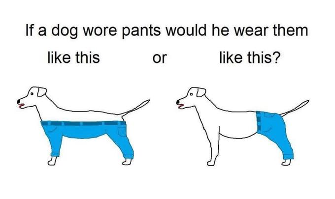 dog in pants